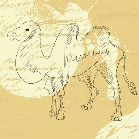 humped: Camel on grunge background