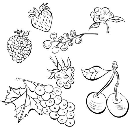 wild strawberry: Sketch of fruit