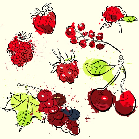 Stylized fruit and berries illustration Vector