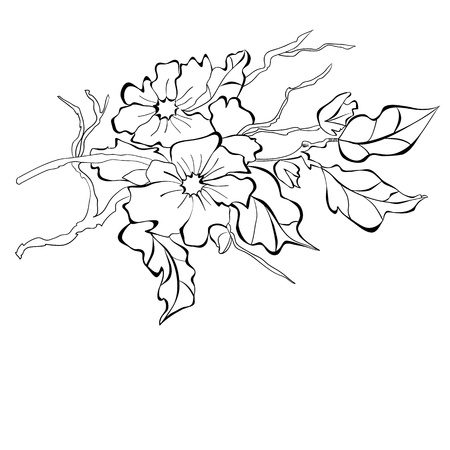 Blossoming branch of an apple-tree Stock Vector - 12930932