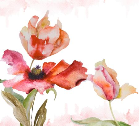 watercolor pen: Watercolor background with tulips and poppy flowers