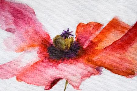 Watercolor Poppy flower photo