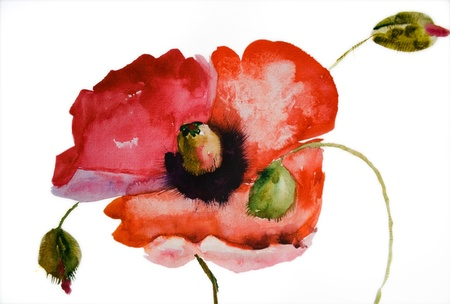Watercolor Poppy flower  Stock Photo