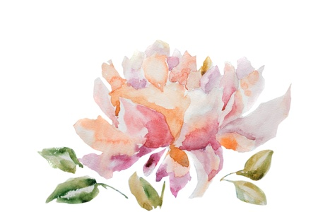 Watercolor illustration of peony flower illustration
