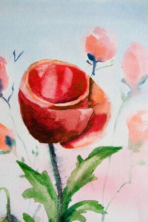Poppy flower watercolor photo
