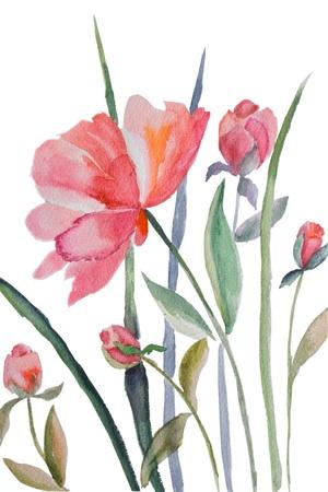 peony: Watercolor illustration of Beautiful peony flowers