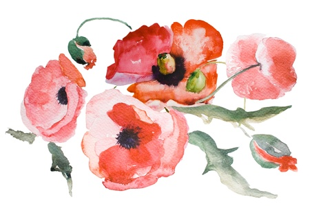 Watercolor Poppy flower photo