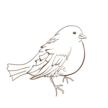 Illustration of bird Stock Vector - 13553242
