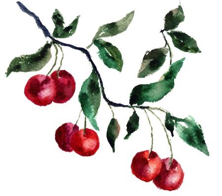 cherry branch: Watercolor cherry