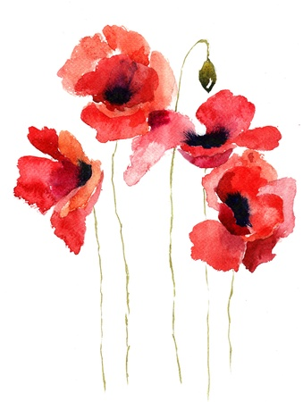 watercolor paper: Stylized Poppy flowers illustration