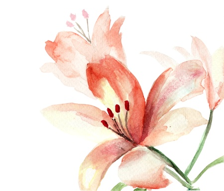 watercolor flower: Beautiful Lily flowers