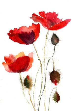 poppy flowers: Red poppy flowers Stock Photo
