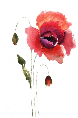 Watercolor illustration of red poppy flower