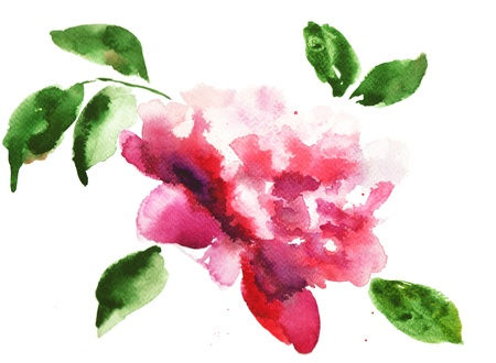 Watercolor illustration of Beautiful peony flowers  illustration