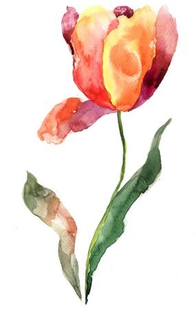 Watercolor illustration of Tulip flower illustration