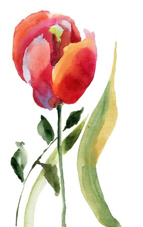 Red tulip flower with green leaves photo