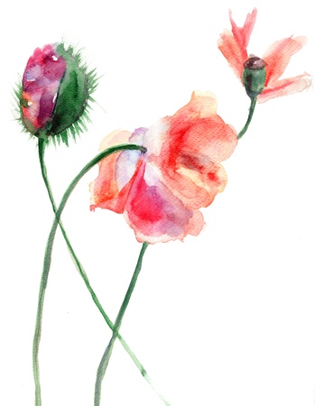 Watercolor illustration of Stylized Poppy flower illustration