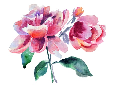 flower drawings: Beautiful Peony flower, Watercolor painting