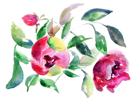 Spring Peony flowers, Watercolor illustration illustration