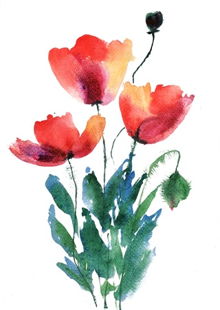 watercolor flower: Red poppy flowers