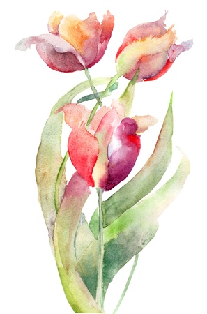 watercolor blue: Watercolor illustration of Tulips flowers Stock Photo