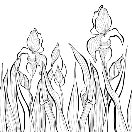 iris flower: Decorative seamless border with Iris flowers, Monochrome illustration Illustration