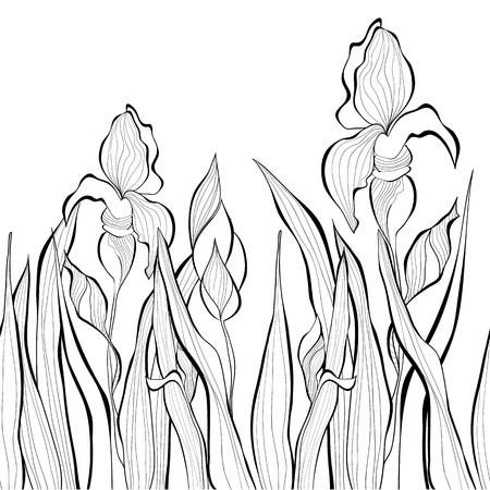 iris flower: Decorative seamless border with Iris flowers, Monochrome illustration Illustration