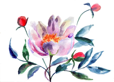 Original Peony flowers, Watercolor illustration illustration