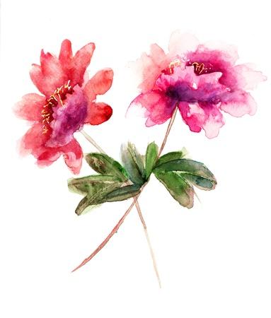 Watercolor illustration of Beautiful peony flowers  illustration