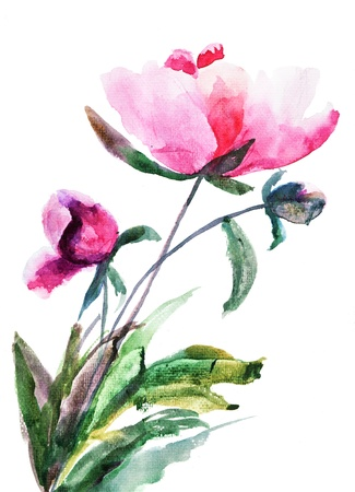 Spring Peony flowers, Watercolor illustration  illustration