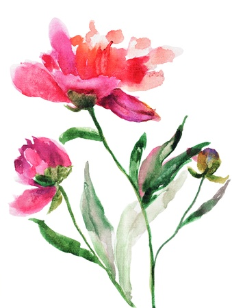 watercolor flower: Watercolor illustration of Beautiful peony flowers