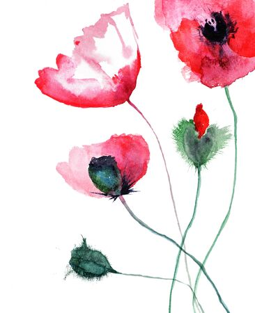 Stylized Poppy flowers, watercolor illustration Stock Illustration - 14468166
