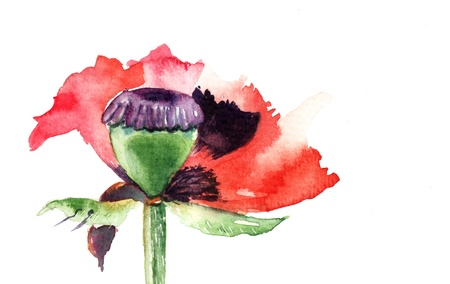 Watercolor illustration of red poppies flowers  illustration