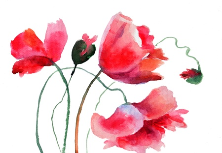 Stylized Poppy flowers, watercolor illustration  Stock Photo