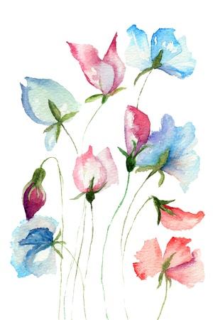 watercolor painting: Sweet pea flowers, watercolor illustration