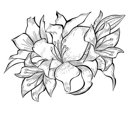 lily flowers: Ilustraci�n blanco y negro de las flores del lirio Vectores