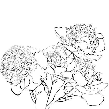 peony black: Template for card Peony flowers Illustration