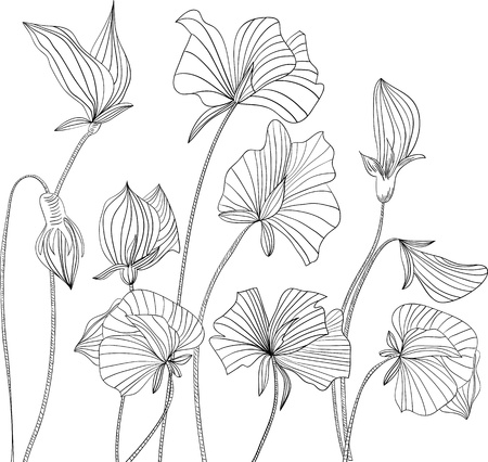 black and white image: Monochrome illustration Sweet pea flowers