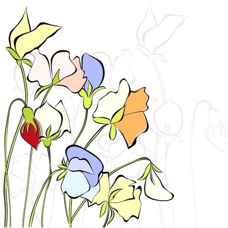 sweet pea: Sweet pea flowers Illustration