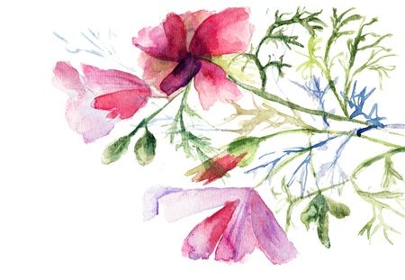 Summer flowers, watercolor illustration  illustration