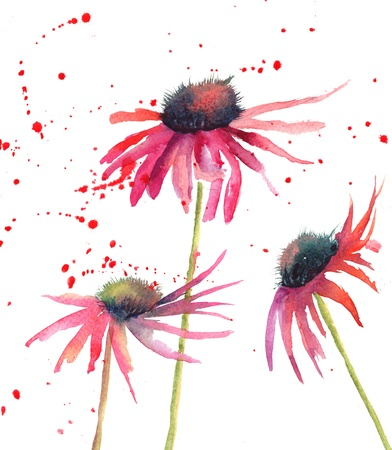 the red flowers: Summer flowers, watercolor flowers