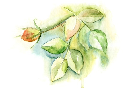 Watercolor illustration with green leaves and rose flower illustration