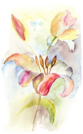 lily flowers: Lily Flores rom�nticas, flores de acuarela