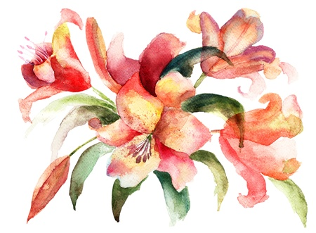 watercolor paper: Lily flowers, watercolor illustration