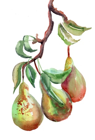 Watercolor Illustration of pears  illustration
