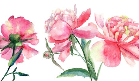 Beautiful Peonies flowers, Watercolor painting  photo