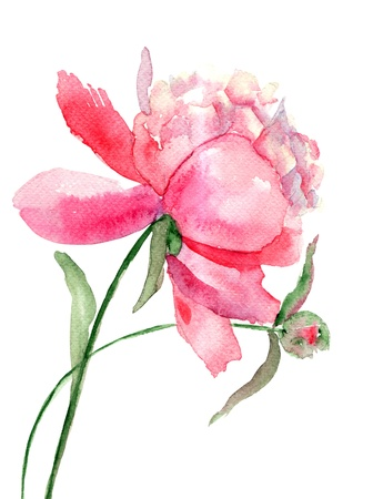 Beautiful Peony flower, Watercolor painting