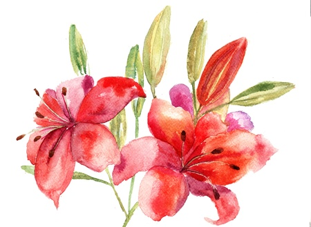 white lily: Beautiful Lily flowers, watercolor illustration