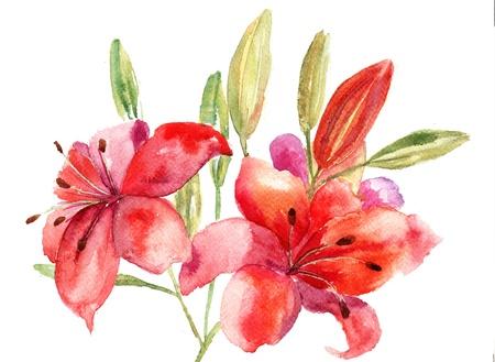 lily flowers: Hermosas flores de lirio, ilustraci�n acuarela