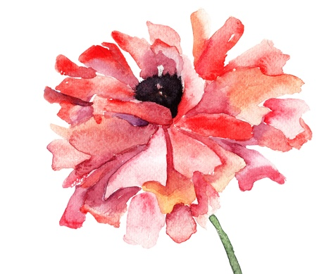 watercolor flower: Stylized Poppy flower illustration